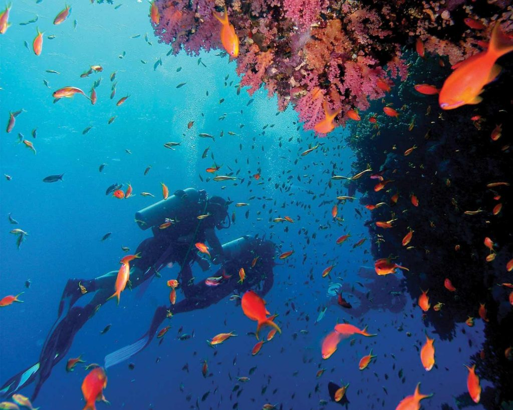 Divers on a vibrant coral reef