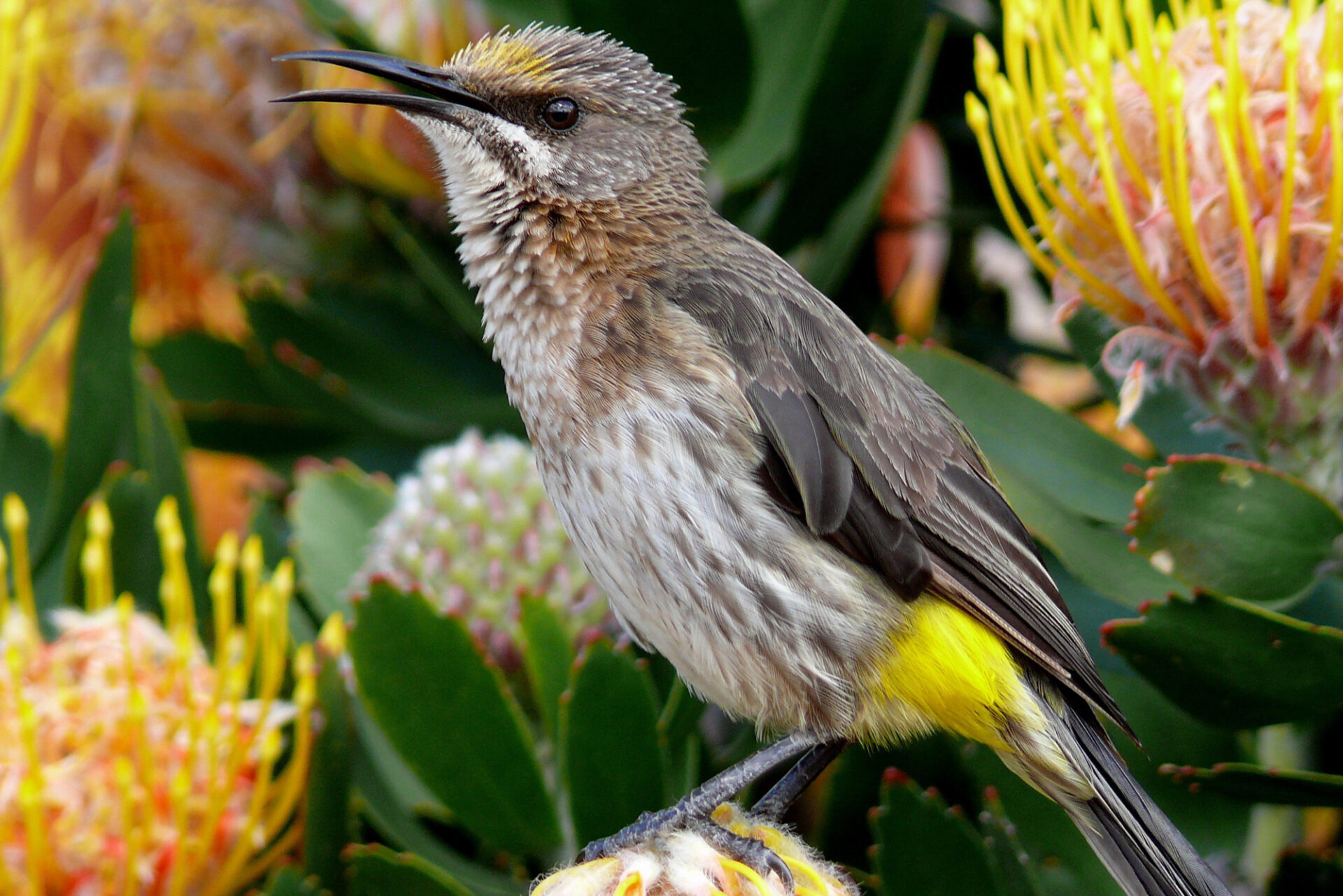 Grootbos Private Nature Reserve Bird