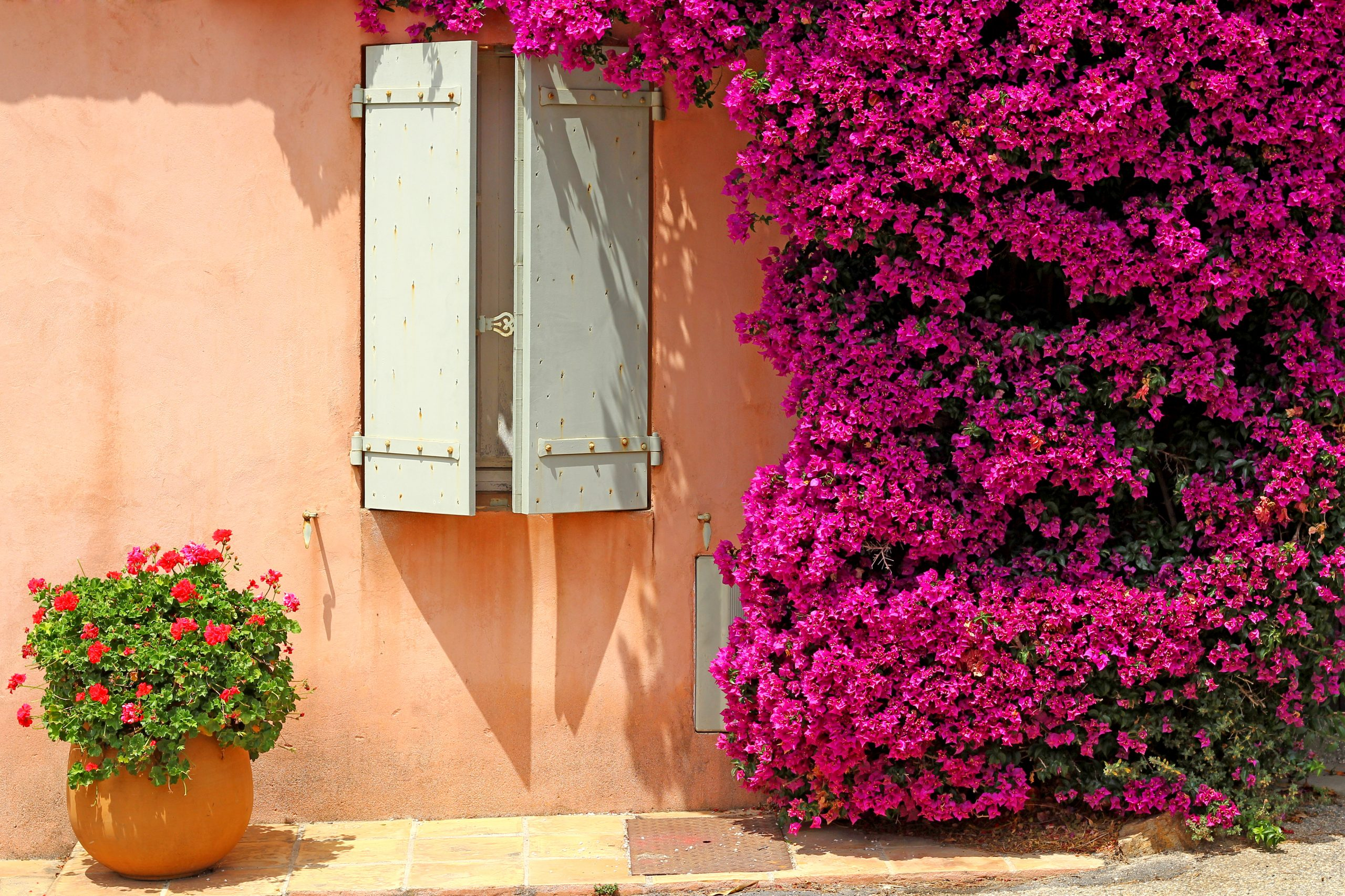 Flowers on provencal house