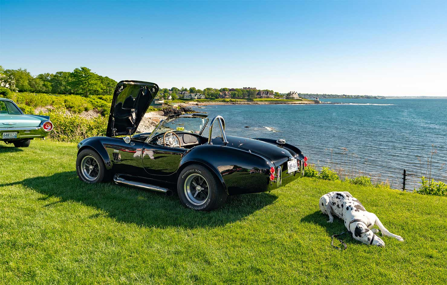 Black classic car with dalmatian dog in the grass