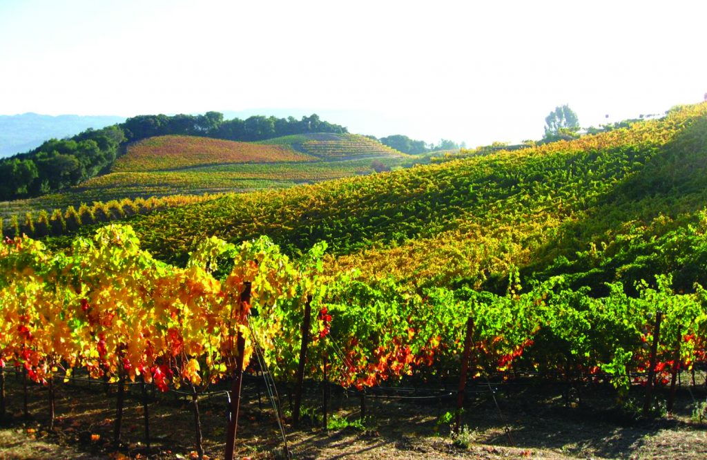 The vineyards of Benziger