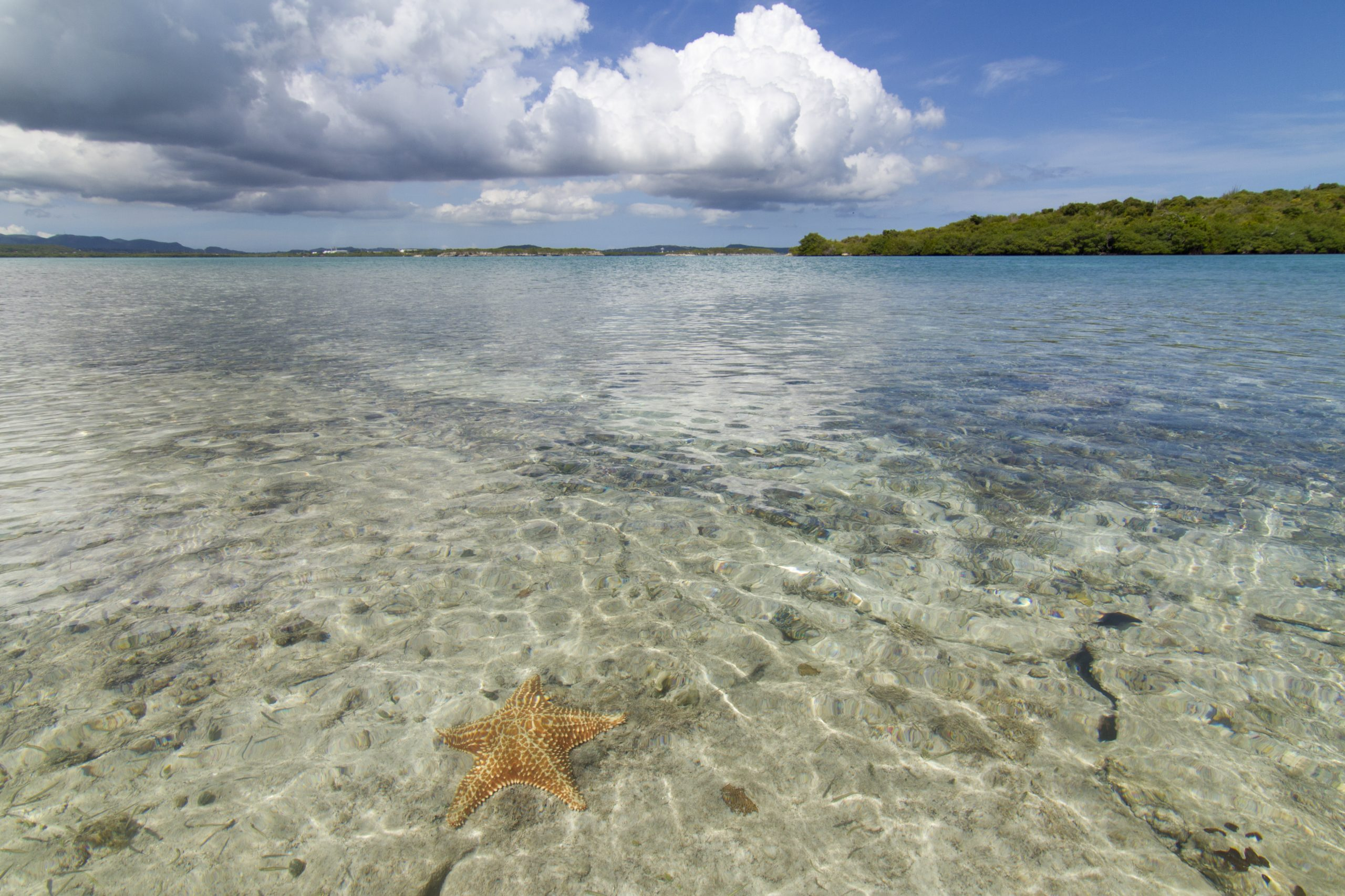 starfish at green island antigua