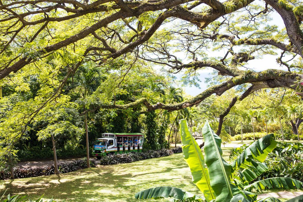 Romney Manor's lush tropical setting